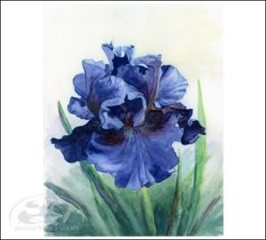 iris notecard amish made in usa