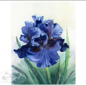 iris notecard amish made in usa