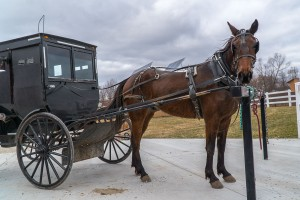 A horse and Amish buggy at a hitching post.