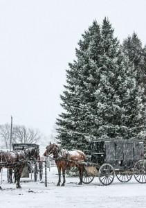 Amish horses and buggies on a snowy day.