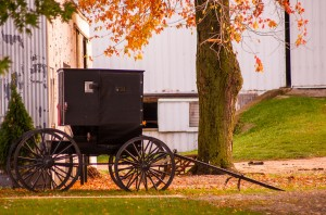 A buggy parked under a maple tree on an autumn day.