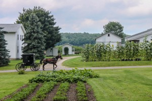 An Amish horse and buggy ride past a lovely Amish garden.