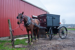 An Amish horse and buggy.