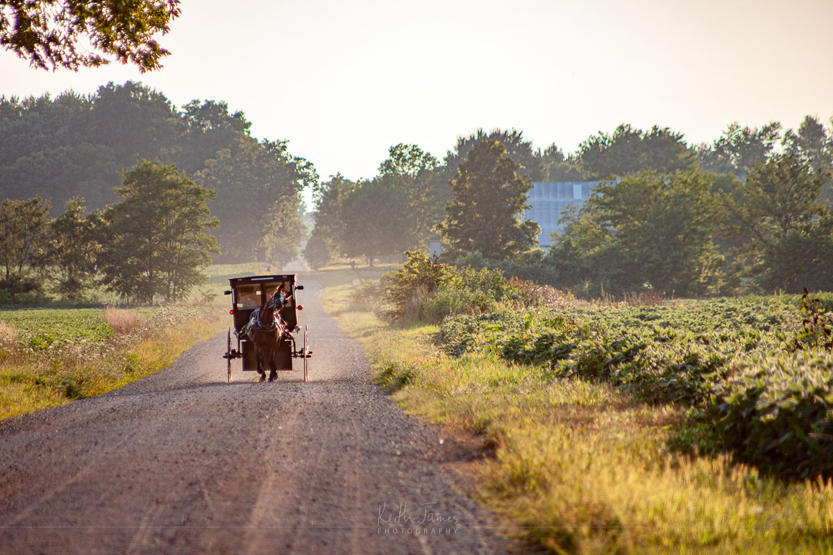 An Amish buggy on a country dirt road.