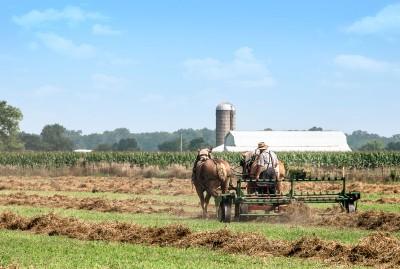 An Amish farmer tedding his hay.