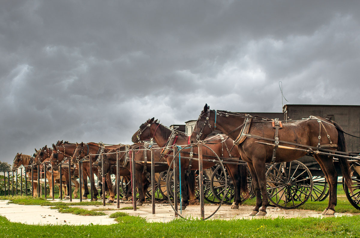 Amish buggies at the hitch on a stormy day.