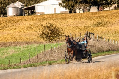 An Amish family takes a drive in a topless buggy.